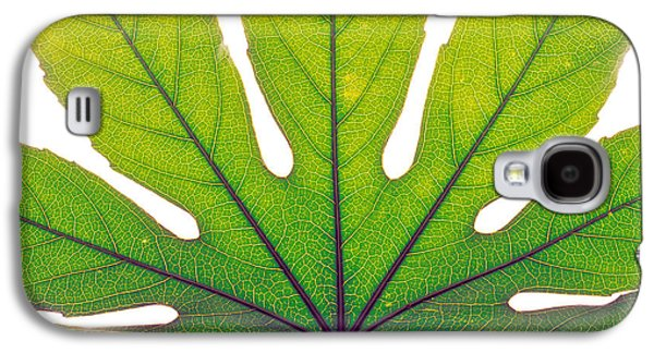 """indoor"" Still Life Photographs Galaxy S4 Cases - Close Up Of Leaf Vein Galaxy S4 Case by Panoramic Images"