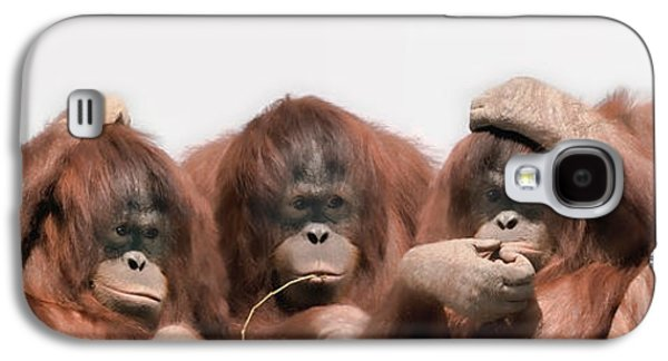 Studio Photography Galaxy S4 Cases - Close-up Of Three Orangutans Galaxy S4 Case by Panoramic Images