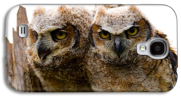 Young Birds Galaxy S4 Cases - Close-up Of Two Great Horned Owlets Galaxy S4 Case by Panoramic Images