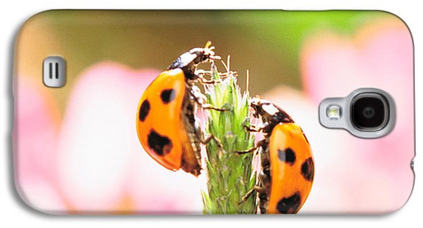 Close Focus Nature Scene Galaxy S4 Cases - Close Up Of Two Ladybugs Galaxy S4 Case by Panoramic Images