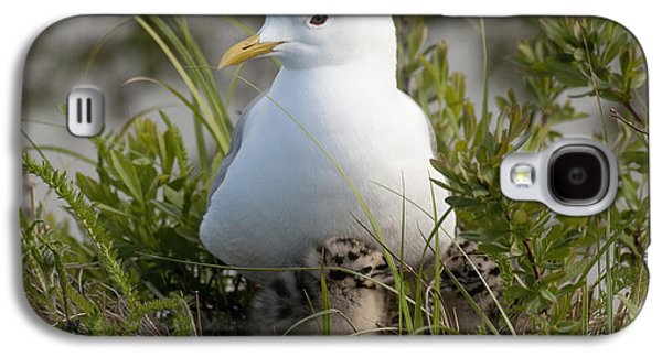 Harts Galaxy S4 Cases - Close Up View Of A Glaucous Gull Galaxy S4 Case by Cathy Hart