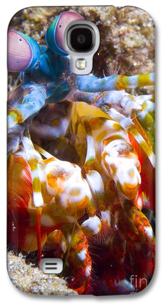 New Britain Galaxy S4 Cases - Close-up View Of A Mantis Shrimp Galaxy S4 Case by Steve Jones