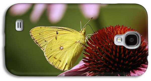Maine Meadow Galaxy S4 Cases - Clouded Sulphur Galaxy S4 Case by Cindi Ressler