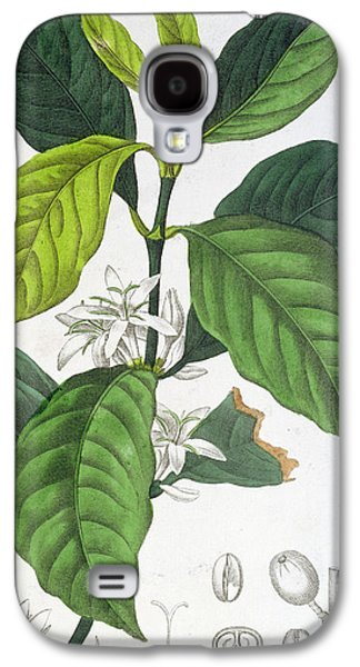 Flora Drawings Galaxy S4 Cases - Coffea Arabica Galaxy S4 Case by Pancrace Bessa