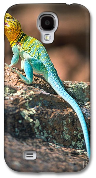Wildlife Refuge. Galaxy S4 Cases - Collared Lizard Galaxy S4 Case by Inge Johnsson