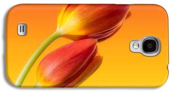 Photographs Galaxy S4 Cases - Colorful Tulips Galaxy S4 Case by Wim Lanclus
