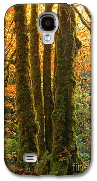 Colors In The Rainforest Galaxy S4 Case by Adam Jewell