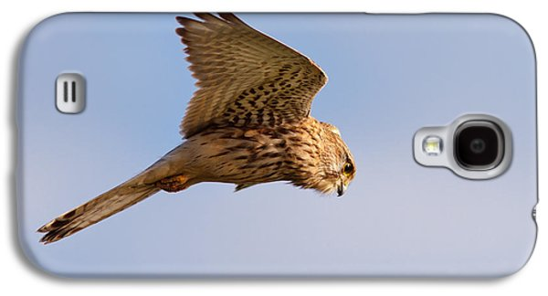 Hovering Galaxy S4 Cases - Common Kestrel hovering in the sky Galaxy S4 Case by Roeselien Raimond