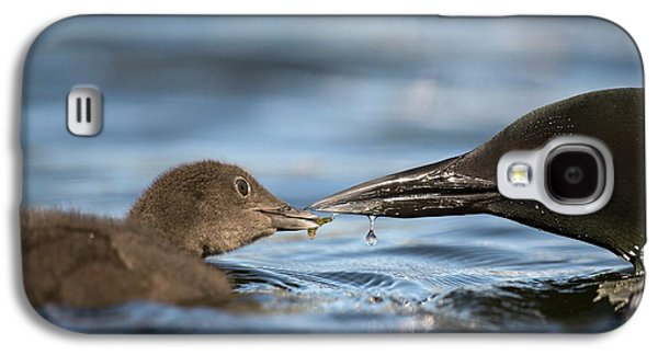 Common Loon Feeding Chick Galaxy S4 Case by Dr P. Marazzi