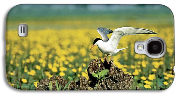 Hirundo Galaxy S4 Cases - Common Tern At Nest With Egg Galaxy S4 Case by Stevan Stefanovic/Okapia