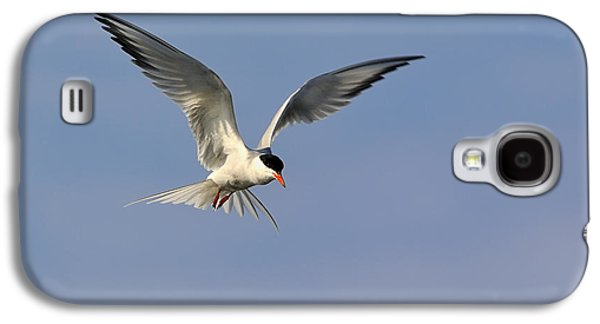 Hirundo Galaxy S4 Cases - Common Tern Hovering Galaxy S4 Case by Tony Beck