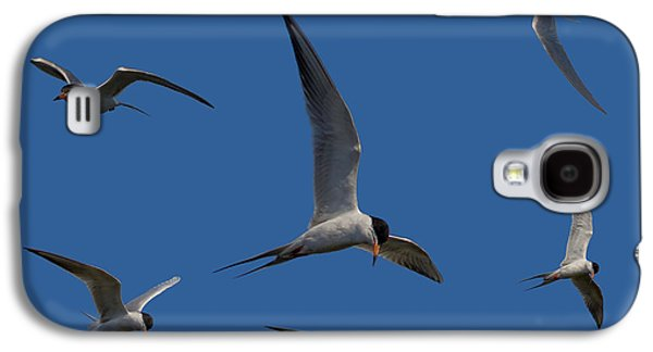Tern Galaxy S4 Cases - Common Terns Collage Galaxy S4 Case by Ernie Echols