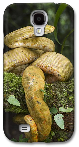 Common Tree Boa -yellow Morph Galaxy S4 Case by Pete Oxford