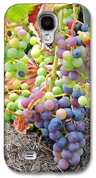 Concord Grapes Galaxy S4 Cases - Concord Grapes Galaxy S4 Case by Helene Guertin