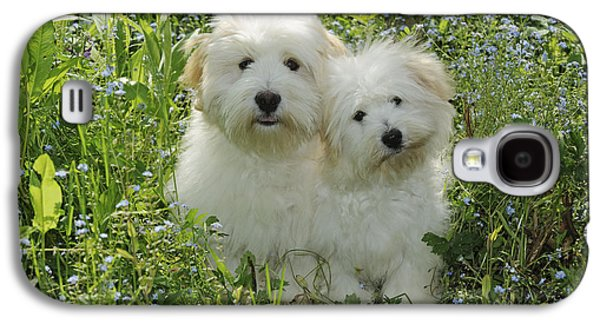 Coton Galaxy S4 Cases - Coton De Tulear Dogs Galaxy S4 Case by John Daniels