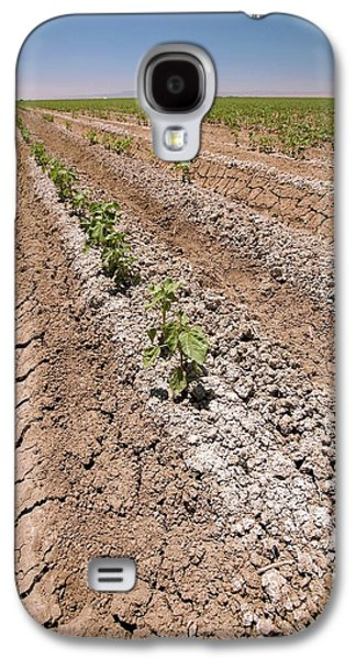 Cotton Crop In Salty Soil Galaxy S4 Case by Gary Banuelos/us Department Of Agriculture
