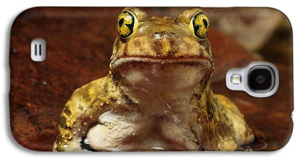 Anurans Galaxy S4 Cases - Couchs Spadefoot Toad Galaxy S4 Case by C K Lorenz