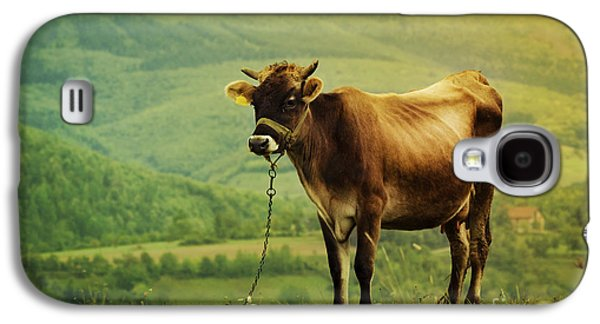 Nature Scene Pyrography Galaxy S4 Cases - Cow in the Field Galaxy S4 Case by Jelena Jovanovic
