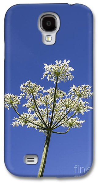 Keck Galaxy S4 Cases - Cow Parsley Galaxy S4 Case by Brian Roscorla
