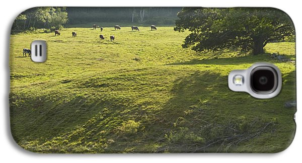Maine Meadow Galaxy S4 Cases - Cows Grazing On Grass In Rockport  Maine Galaxy S4 Case by Keith Webber Jr
