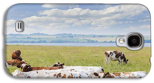 Feeding Galaxy S4 Cases - Cows in pasture Galaxy S4 Case by Elena Elisseeva
