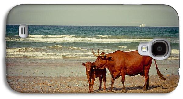 Animal Pyrography Galaxy S4 Cases - Cows On Sea Coast Galaxy S4 Case by Raimond Klavins