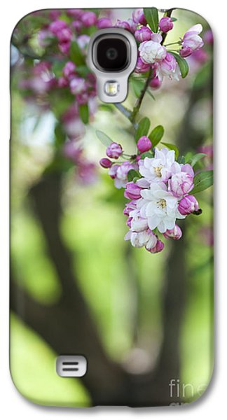 Fruit Tree Galaxy S4 Cases - Crab Apple Snow Cloud Tree Blossom Galaxy S4 Case by Tim Gainey