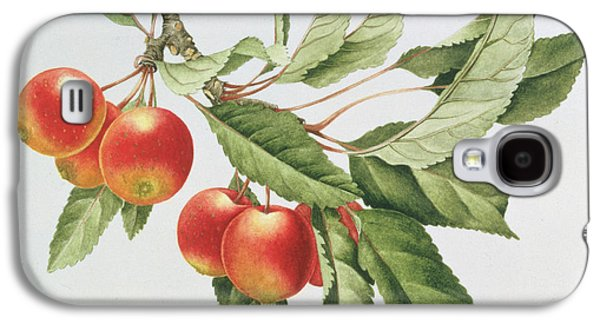 Apple Galaxy S4 Cases - Crab Apples Galaxy S4 Case by Sally Crosthwaite