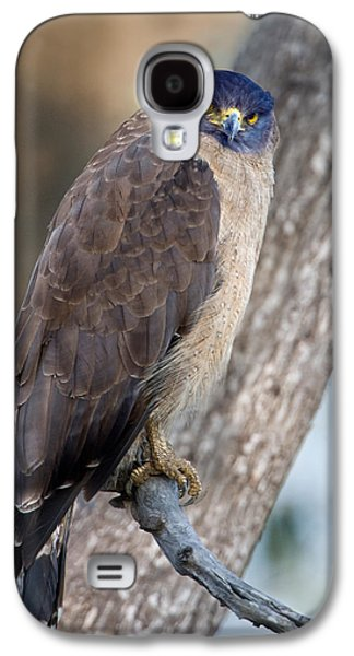 Serpent Galaxy S4 Cases - Crested Serpent Eagle Spilornis Cheela Galaxy S4 Case by Panoramic Images
