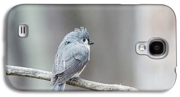 Tufted Titmouse Galaxy S4 Cases - Crested Titmouse Galaxy S4 Case by Douglas Barnett