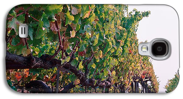 Sonoma County Vineyards. Galaxy S4 Cases - Crops In A Vineyard, Sonoma County Galaxy S4 Case by Panoramic Images