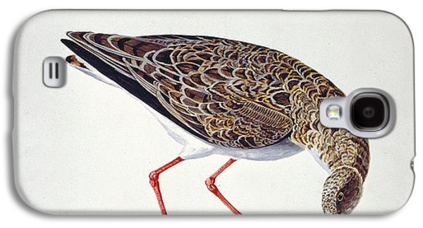 Feather Drawings Galaxy S4 Cases - Curlew Sandpiper Galaxy S4 Case by Charles Collins