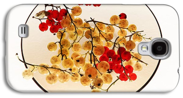 Berries Galaxy S4 Cases - Currants on a plate Galaxy S4 Case by Vitaliy Gladkiy