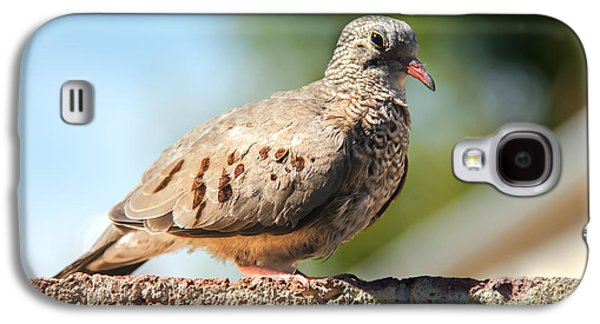 Haybale Galaxy S4 Cases - Cute Inca Dove Galaxy S4 Case by Robert Bales