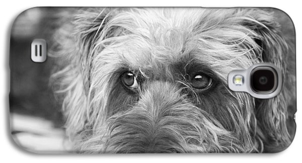 Dogs Digital Galaxy S4 Cases - Cute Scruffy Pup in Black and White Galaxy S4 Case by Natalie Kinnear