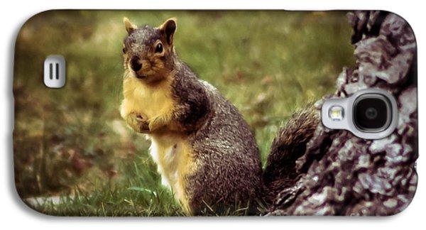 Fox Squirrel Galaxy S4 Cases - Cute Squirrel Galaxy S4 Case by Robert Bales