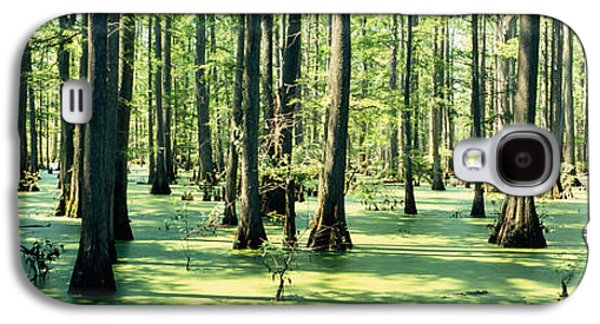 Alga Galaxy S4 Cases - Cypress Trees In A Forest, Shawnee Galaxy S4 Case by Panoramic Images