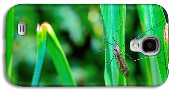 Invertebrates Mixed Media Galaxy S4 Cases - Daddy long legs  Galaxy S4 Case by Toppart Sweden