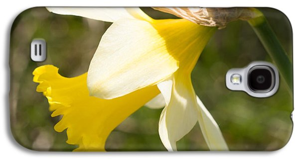 Flowers Galaxy S4 Cases - Daffodil Flower Galaxy S4 Case by Robert Carr