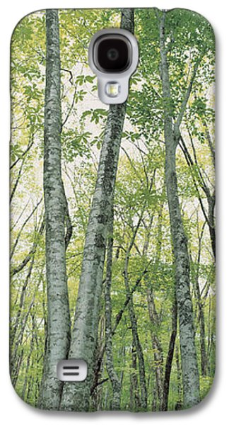 Forest Floor Galaxy S4 Cases - Daisen Tottori Japan Galaxy S4 Case by Panoramic Images