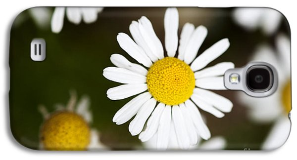 Botany Galaxy S4 Cases - Daisies Galaxy S4 Case by Juli Scalzi