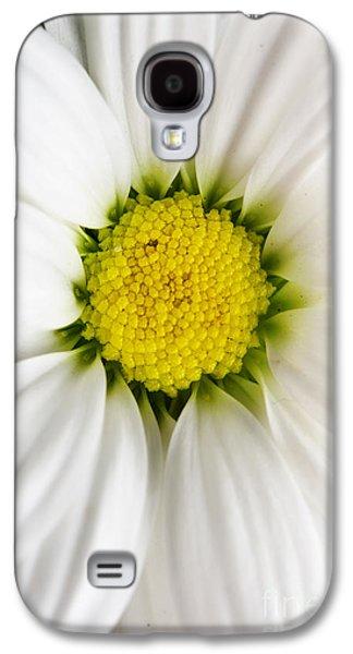 Beautiful Pyrography Galaxy S4 Cases - Daisy Galaxy S4 Case by Jelena Jovanovic