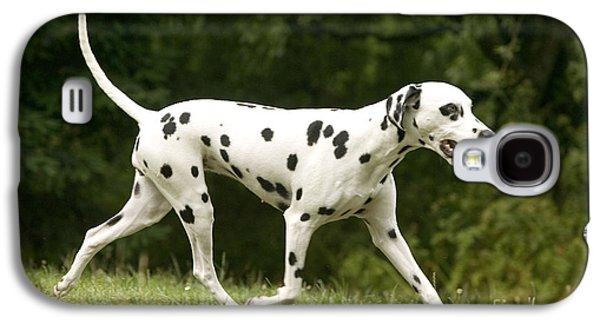 Dog Trots Galaxy S4 Cases - Dalmatian Running Galaxy S4 Case by Jean-Michel Labat