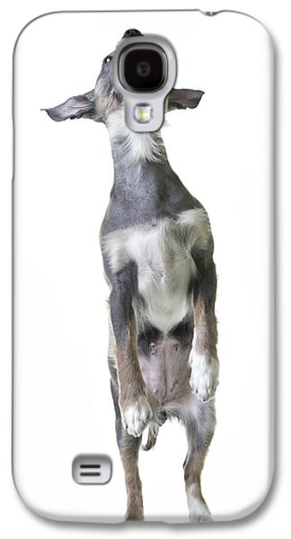 Cute Puppy Galaxy S4 Cases - Dancing Dog Galaxy S4 Case by Edward Fielding