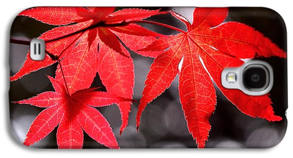 Nature Abstract Galaxy S4 Cases - Dancing Japanese Maple Galaxy S4 Case by Rona Black
