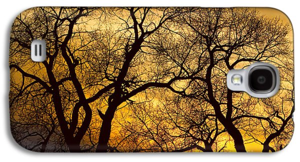 Landscape Acrylic Prints Galaxy S4 Cases - Dancing Trees Golden Sunset Galaxy S4 Case by James BO  Insogna
