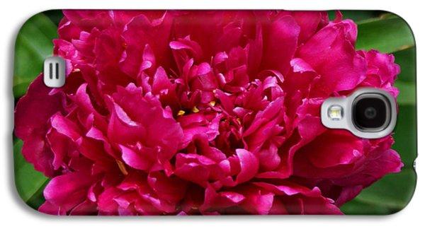 Indiana Flowers Galaxy S4 Cases - Dark Pink Peony II Galaxy S4 Case by Sandy Keeton