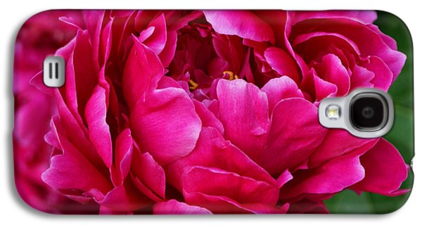 Indiana Flowers Galaxy S4 Cases - Dark Pink Peony Galaxy S4 Case by Sandy Keeton