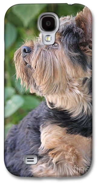 Puppies Pyrography Galaxy S4 Cases - Day Dreamin Yorkie Galaxy S4 Case by Melody Ballard