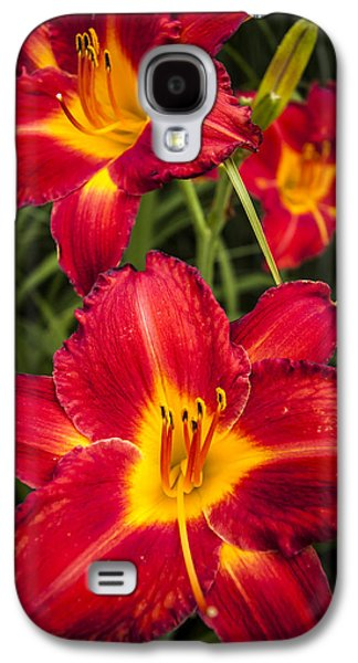 Stigma Galaxy S4 Cases - Day Lilies Galaxy S4 Case by Adam Romanowicz